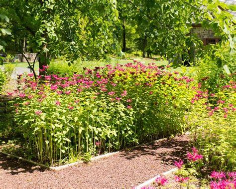 garden of plants moland house