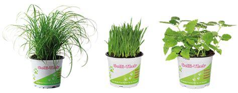 unbedenkliche pflanzen für katzen fr 252 hling im katzenhaushalt vorsicht vor giftpflanzen golli thek 174