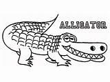Alligator Coloring Pages Printable Line Crocodile Drawing Gator Gus Wally Alligators Preschool Monkeys Getdrawings Bar Looking Five Animal Jumping Again sketch template