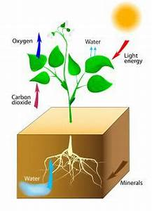 What Is Potential Evapotranspiration? (with picture)