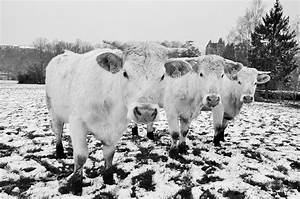 6 Winter Tricks That Keep Livestock Water From Freezing ...