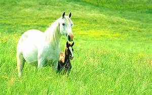 Animals Wallpapers|Animals Pictures | Beautiful Cool ...
