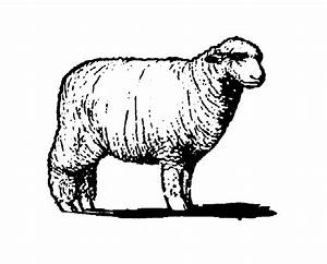 Sheep black and white sheep clipart black and white free ...