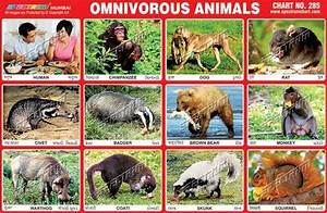 Related Keywords & Suggestions for omnivore animals list names