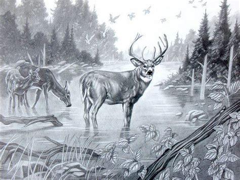 pics  deer pencil sketch animal art