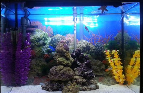 marineland hidden led lighting system 21 length most beautiful saltwater fish tanks 2013