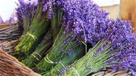 Kosova shënon rritje të eksportit të bimëve aromatike dhe ...