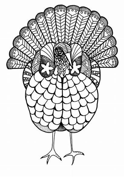Coloring Adult Turkey Colorful Thanksgiving Pages Fall