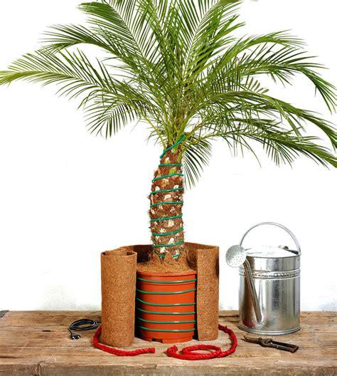 winterschutz für pflanzen selber bauen palmen 252 berwintern selbst de