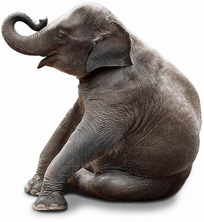 Elephant Sitting Silhouette Clipart Snapsafe Transparent Clip