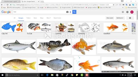 benifits  fish  tamil youtube