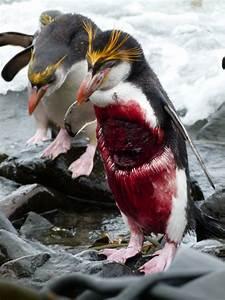 Wildlife  U2014 Australian Antarctic Division