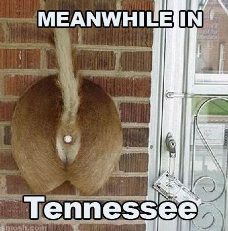 Tennessee Memes - tennessee meme memes