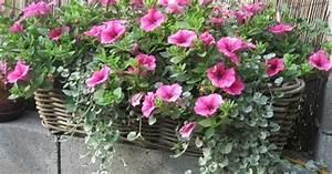Herbstliche Blumenkästen Bilder : blumenkasten auf die fensterb nke garten garden ~ Lizthompson.info Haus und Dekorationen