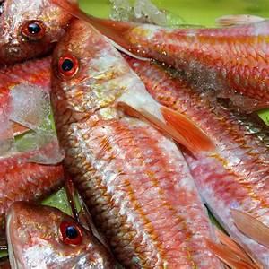 Comprar Pescado Fresco Online  Salmonete De Roca