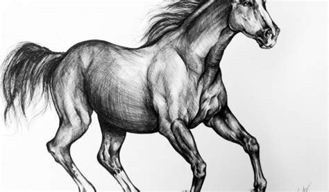 horse drawings on Clipart library | Horse Sketch, Drawings ...
