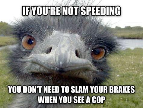 Ostrich Meme - obvious advice ostrich funny d pinterest