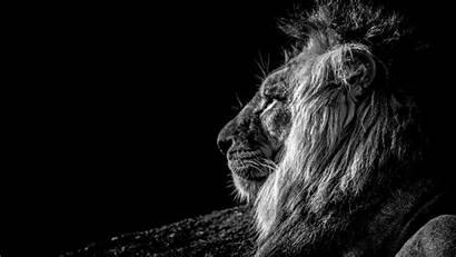 Lion 4k Bw Uhd Cool 1080p Dark