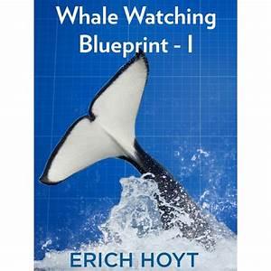 Whale Watching Blueprint I