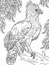 Harpy Perched sketch template