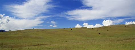pastoral pasture stock photo freeimagescom