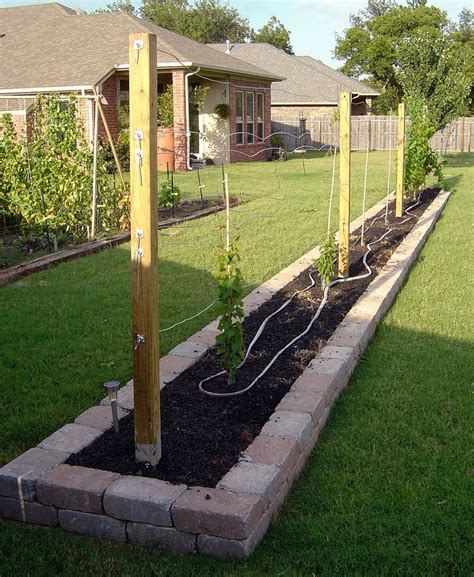 muscadine trellis design 17 best images about grape vines on pinterest gardens backyards and grape vines