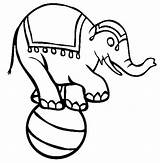 Circus Coloring Ball Elephant Standing Sketch Drawings Coloringsun Template sketch template