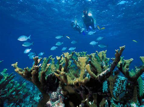 caribbean snorkeling adventure on the riviera maya pro