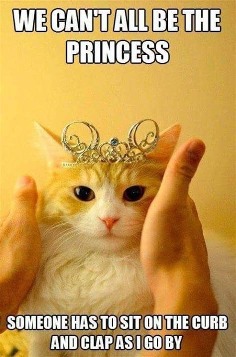 Mere Cat Meme - 25 best ideas about funny birthday on pinterest birthday greetings to sister birthday memes