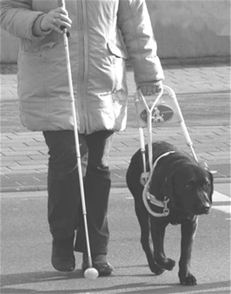 Hunde Ausführen Job