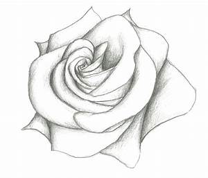 Rose Simple Pencil Drawing Simple Close Up Drawings ...