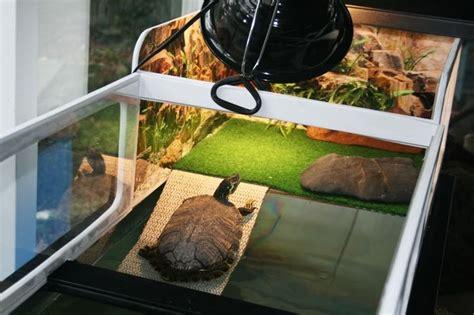 aquatic turtle basking light plexi basking area turtle tank pinterest ideas
