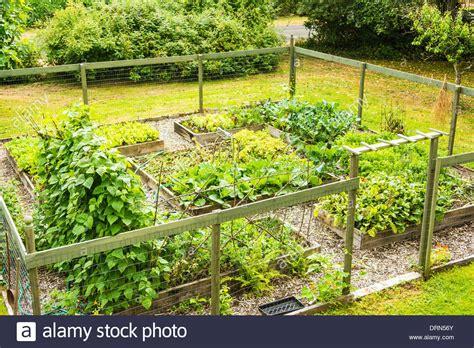 backyard vegetable garden astoria oregon usa stock