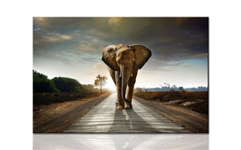 huge elephant coming large hd canvas print painting