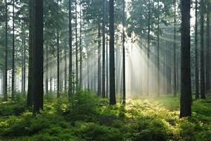 Bilder Vom Wald : waldsterben das kosystem wald in gefahr geo ~ Yasmunasinghe.com Haus und Dekorationen