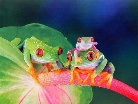 Funny Frogs - XciteFun.net