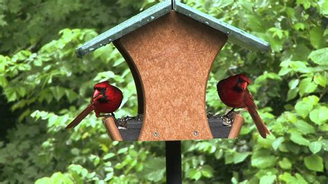 ecotough classic feeder video wild birds unlimited