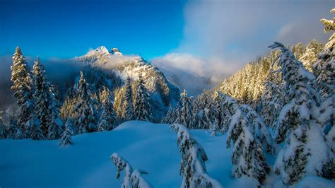 wallpaper winter mountains forest canada hd nature