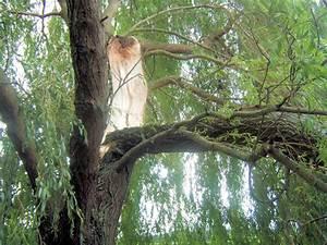Comment Creuser Un Tronc D Arbre : saule pleureur r parer un tronc d 39 arbre arrach ~ Melissatoandfro.com Idées de Décoration