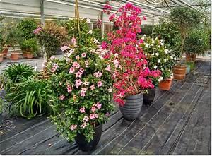 Pflanzen Im Treppenhaus : berwinterung von k belpflanzen giersch gartenbau ~ Orissabook.com Haus und Dekorationen