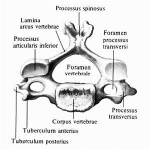 Подмор пчелиный применение для суставов мазь