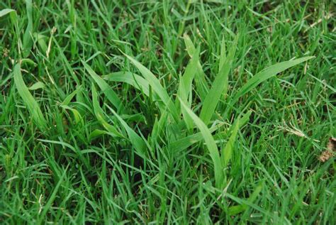 Weed Control Control Grassy Weeds (junk Grass