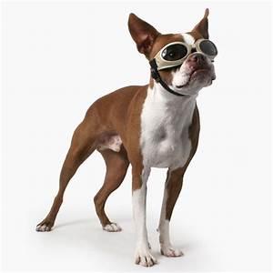 doggles dog sunglasses