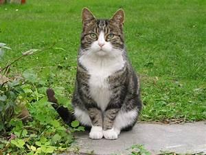 Katze Im Garten Begraben : katzen im garten ~ Lizthompson.info Haus und Dekorationen