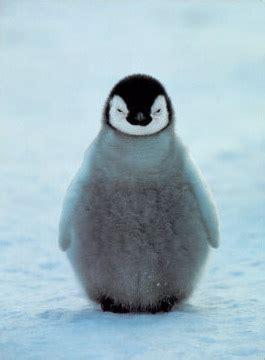 penguin symbolism penguin meaning spirit animals