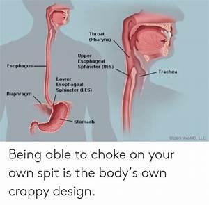 Throat Pharyn Upper Esophageal Sphincter Ues Esophagus