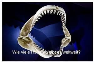 Wie Viele Arme Hat Ein Oktopus : wie viele haiarten gibt es ~ A.2002-acura-tl-radio.info Haus und Dekorationen