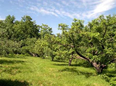 Fruit and Nut Producing Trees for USDA Hardiness Zone 8B ...