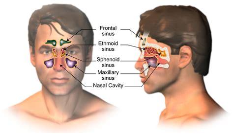 clinical research  head  neck cancer cruk cc