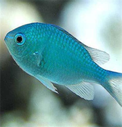 marine aquarium fish species tropical coldwater aquarium